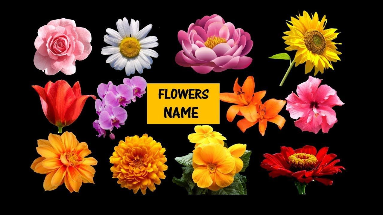 Learn Names Of Flowers Flower In Animation Learning For