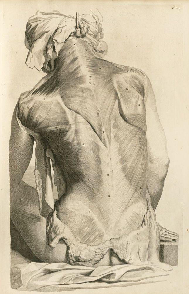 design-is-fine: William Cowper (Govard Bidloo), The anatomy of ...