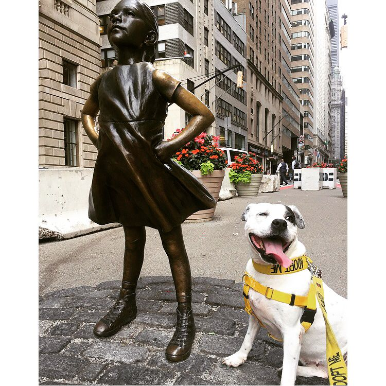 rhoda when she met another fearless girl on wall street on wall street today id=31519