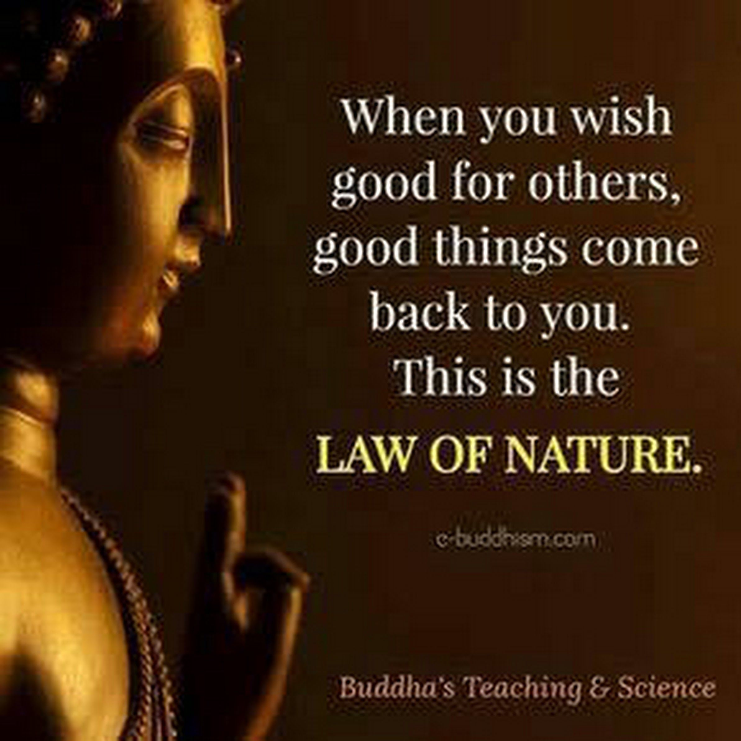 Sign in | Buddhist quotes, Buddha quote, Buddha quotes inspirational