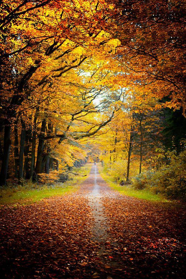 Autumn-Wonderland by Carsten MeyerdierksSachsenwald near Hamburg, Germany
