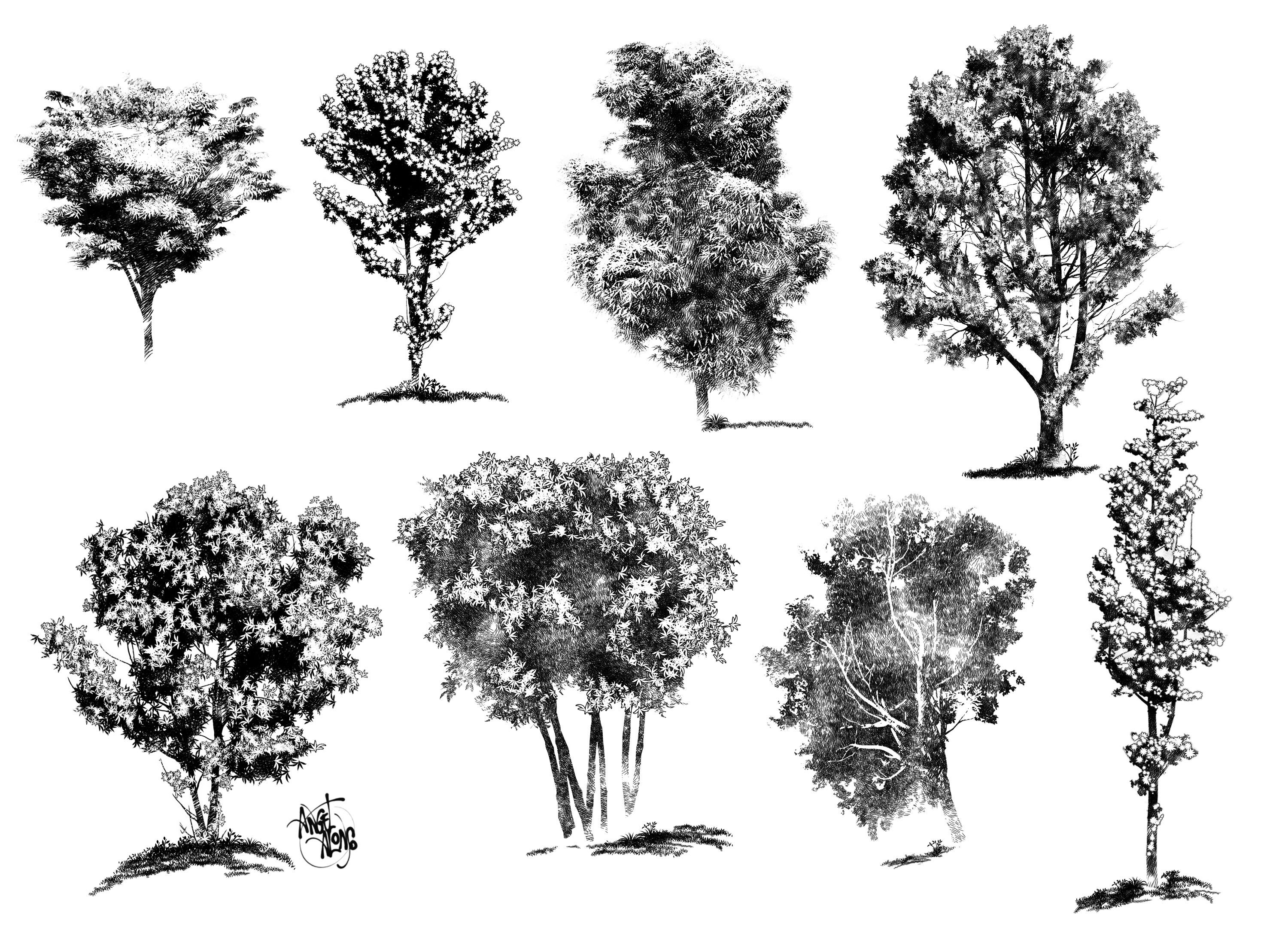 landscape architecture tree drawings spydelhigencookcom - Architecture Drawing Of Trees