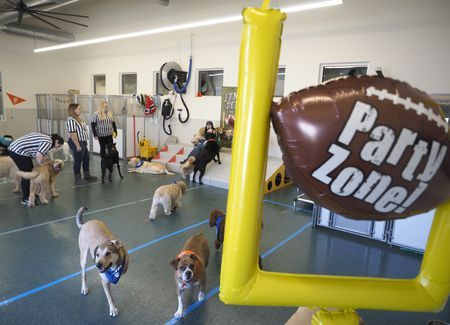 Photo of Puppy Bowl 2020: What to know, how to watch