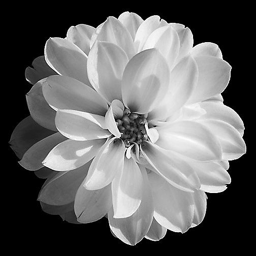 Pin by lourdes castaneda on drawing inspiration pinterest white image detail for fine art black white photography mightylinksfo