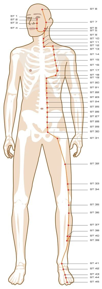 Acupuncture Meridian Stomach Meridian Acupuncture Acupuncture Points Acupuncture