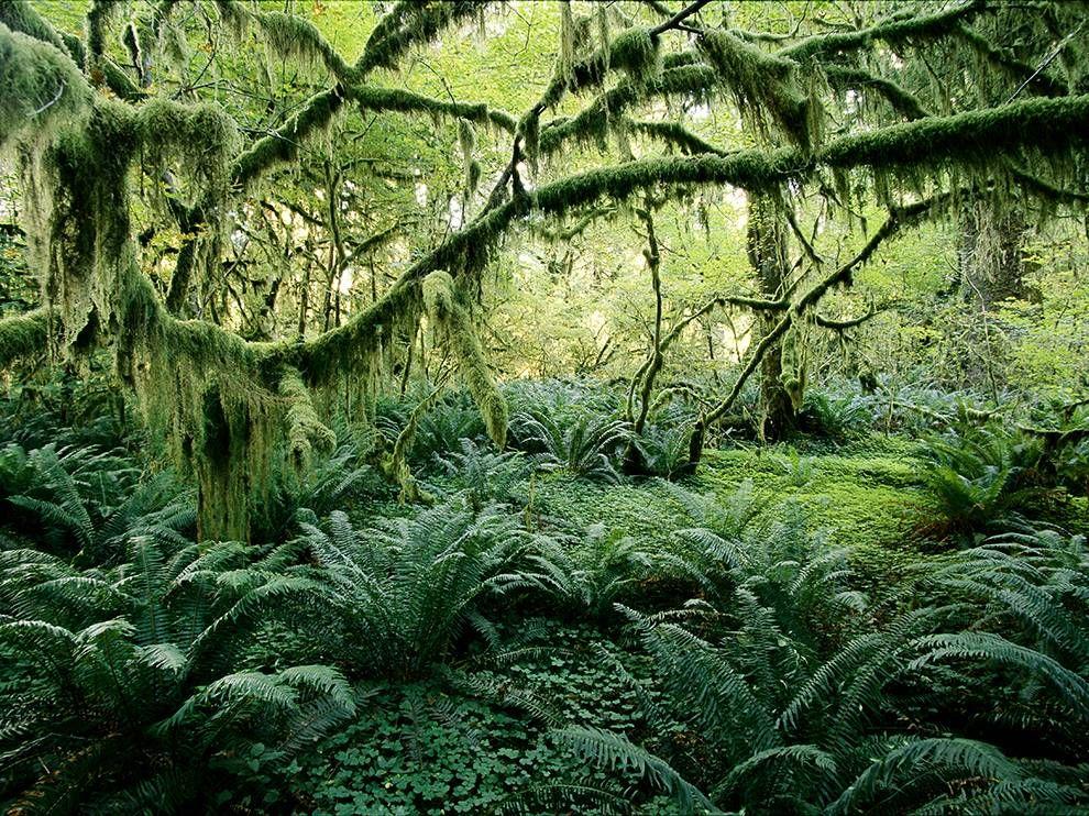 Vegetation Vancouver Island