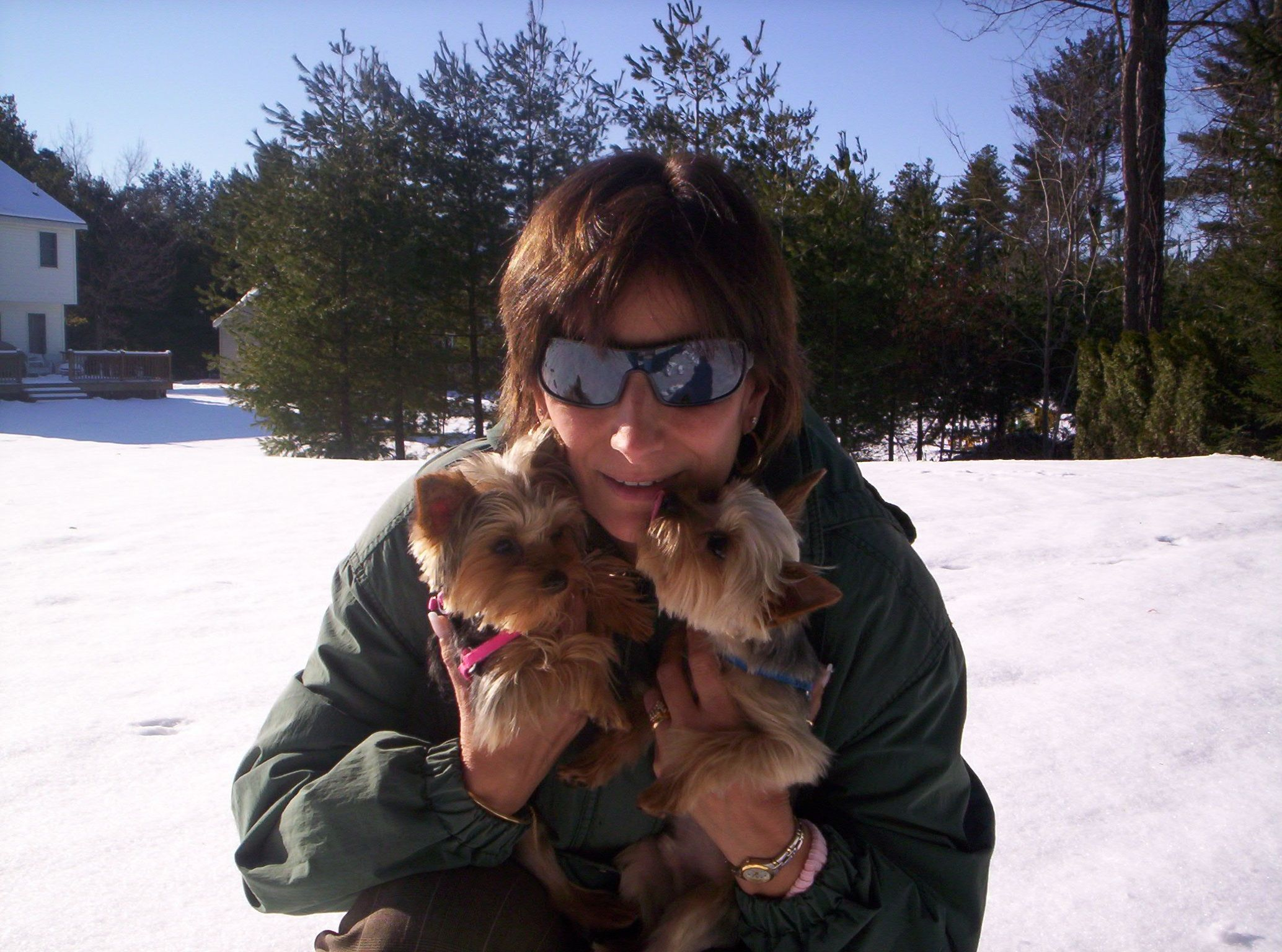 In Upstate Ny My Yorkies Frankie And Sophia Yorkie Frankie Pets