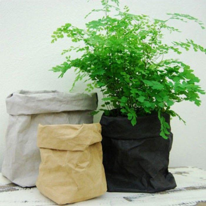 Zet Je Plant In Een Papieren Zak Zakken Zijn Van Uashmama