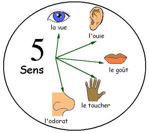 Les Cinq Sens 5 Sens Maternelle Les Cinq Sens 5 Sens