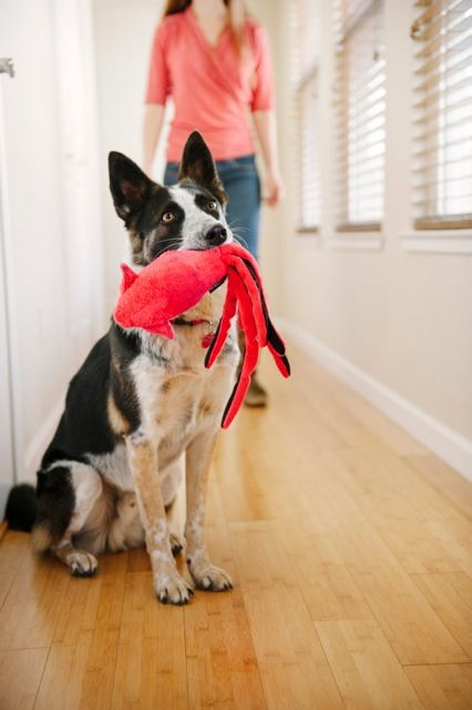6 Dog Toy Companies Making Tough And Sustainable Toys Dog Toys