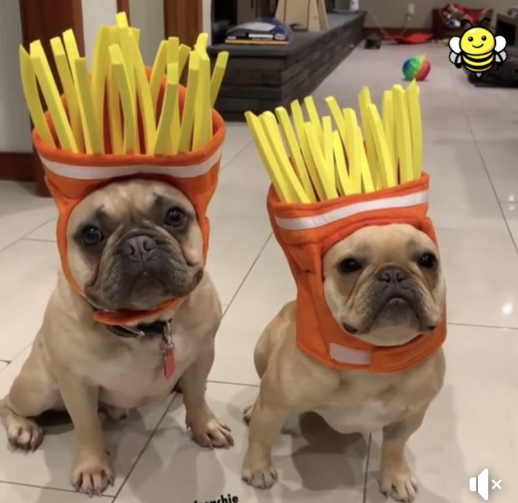 French Fries Funny Animals French Bulldog Halloween Costumes