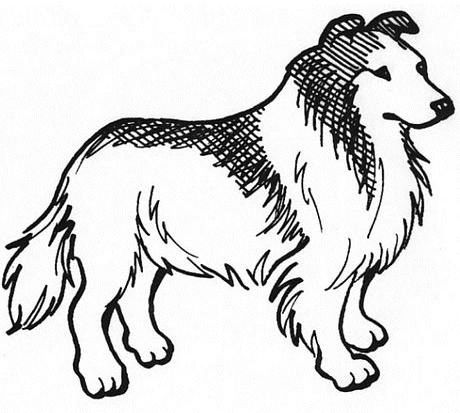 Lassie Teenagers Coloring Pages