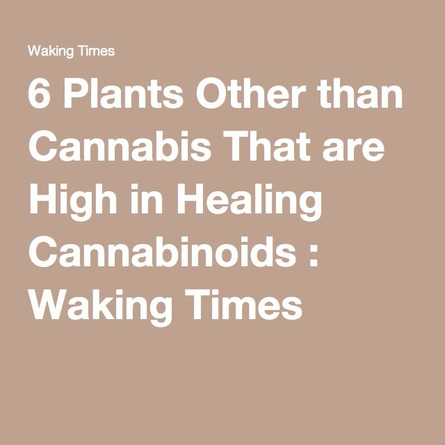 6 Plants Other than Cannabis That are High in Healing Cannabinoids : Waking Times