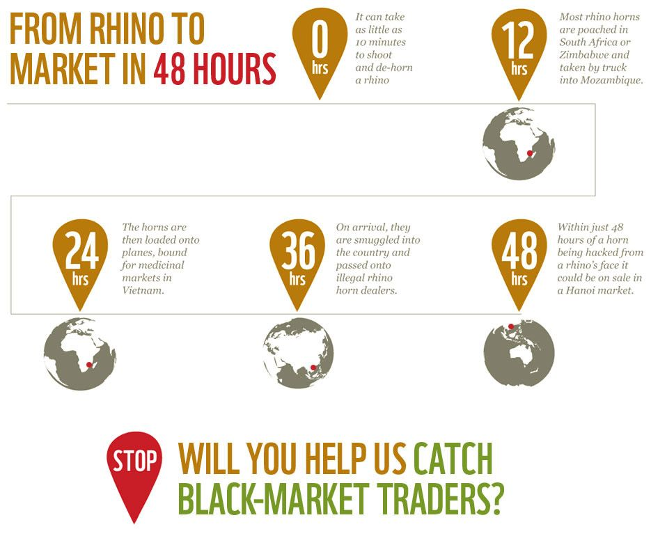 Infographic From Rhino To Market In Just 48 Hours