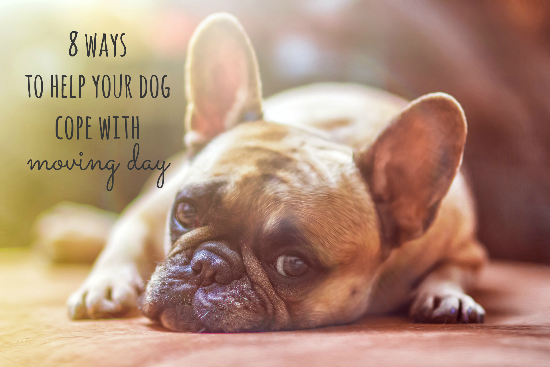 ways to help your dog cope with moving day dogg blog pinterest