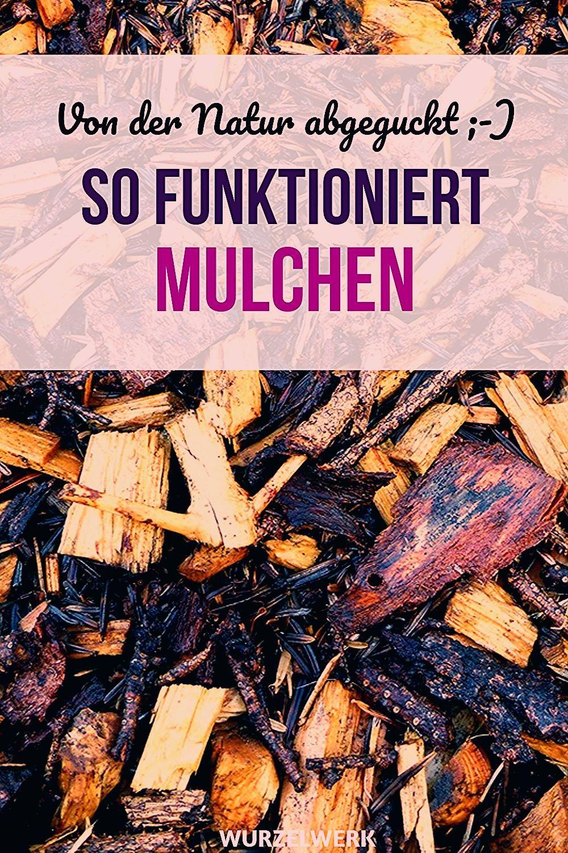 Photo of So funktioniert Mulchen! Schritt für Schritt zum Mulchbeet – Wurzelwerk