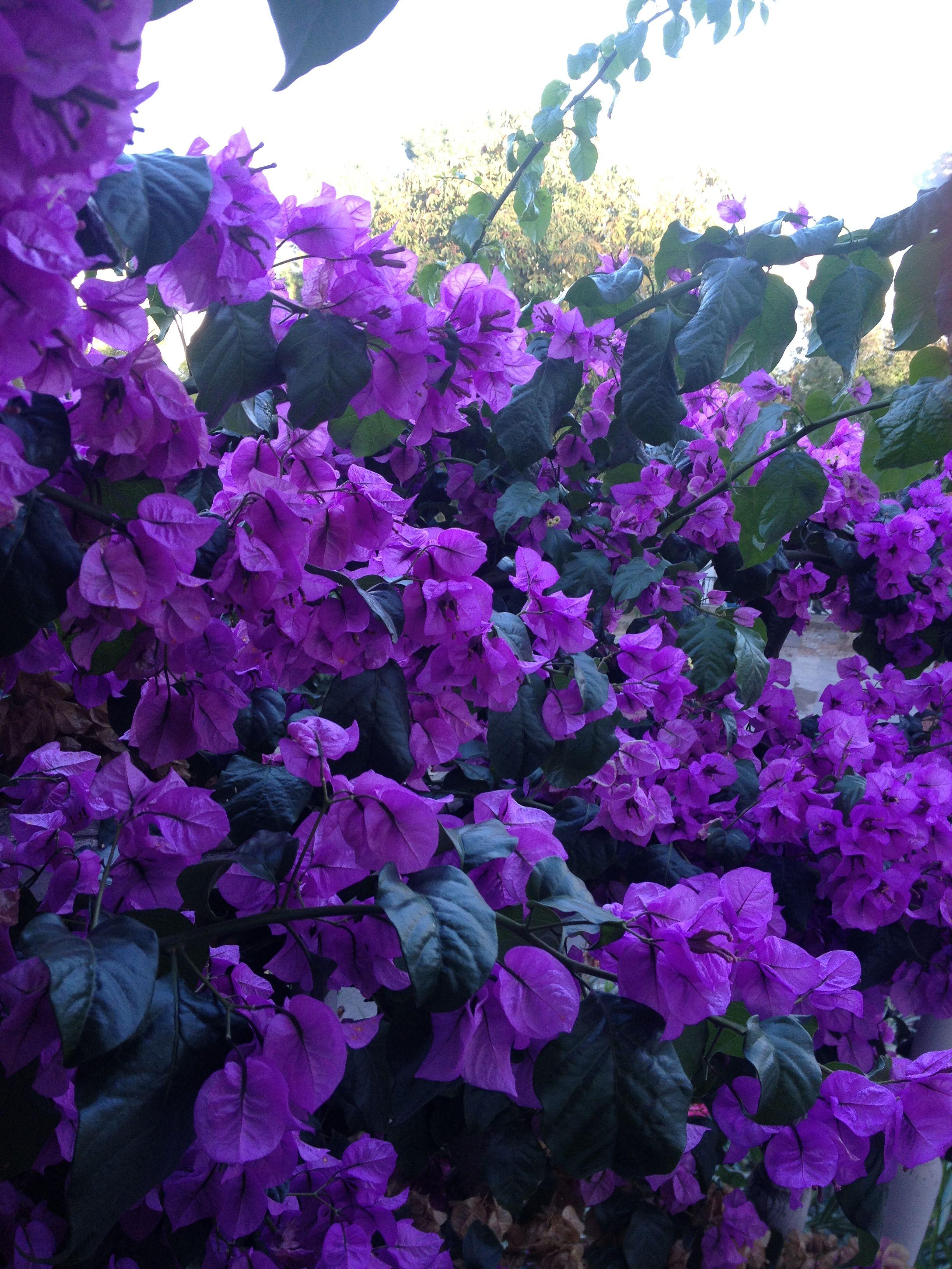 Flowers of my balcony, in Heybeliada Istanbul.