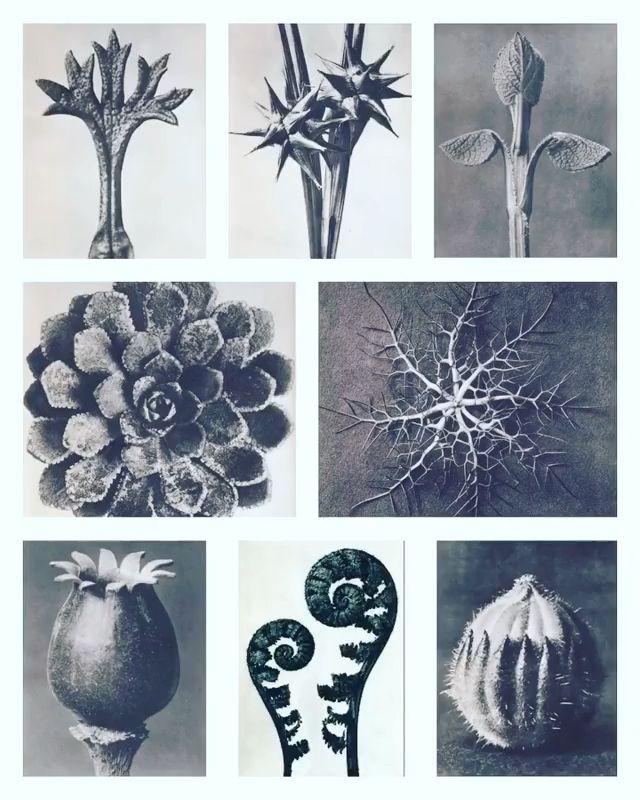 Beautiful bizarre botanical black and white photos by Karl Blossfeldt -   16 artistic plants Photography ideas