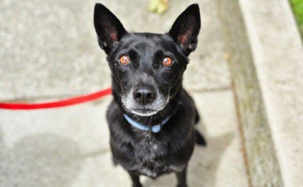 Loki Rocket Dog Rescue Dog Adoption Pets Funny Animals