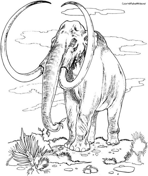 Pin By Eva Stovall On Animals Baby Coloring Pages Dinosaur