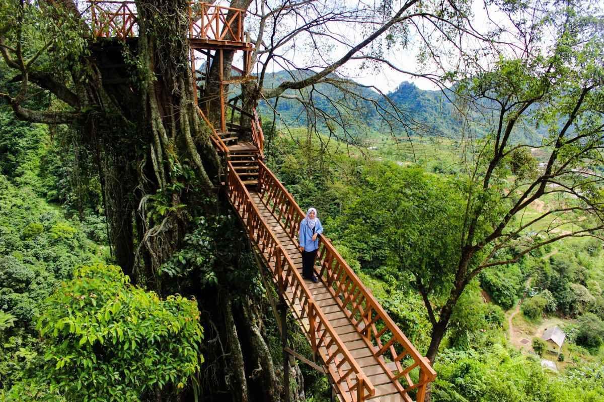 Wisata Dekat Jakarta Pemandangan Tempat Rumah Pohon