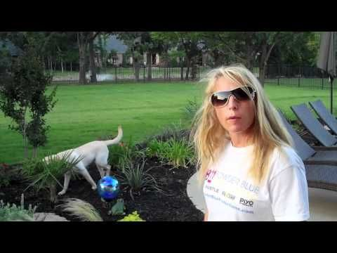 Beachbody Ultimate Reset Review | Fitness Professionals Review | Day 10
