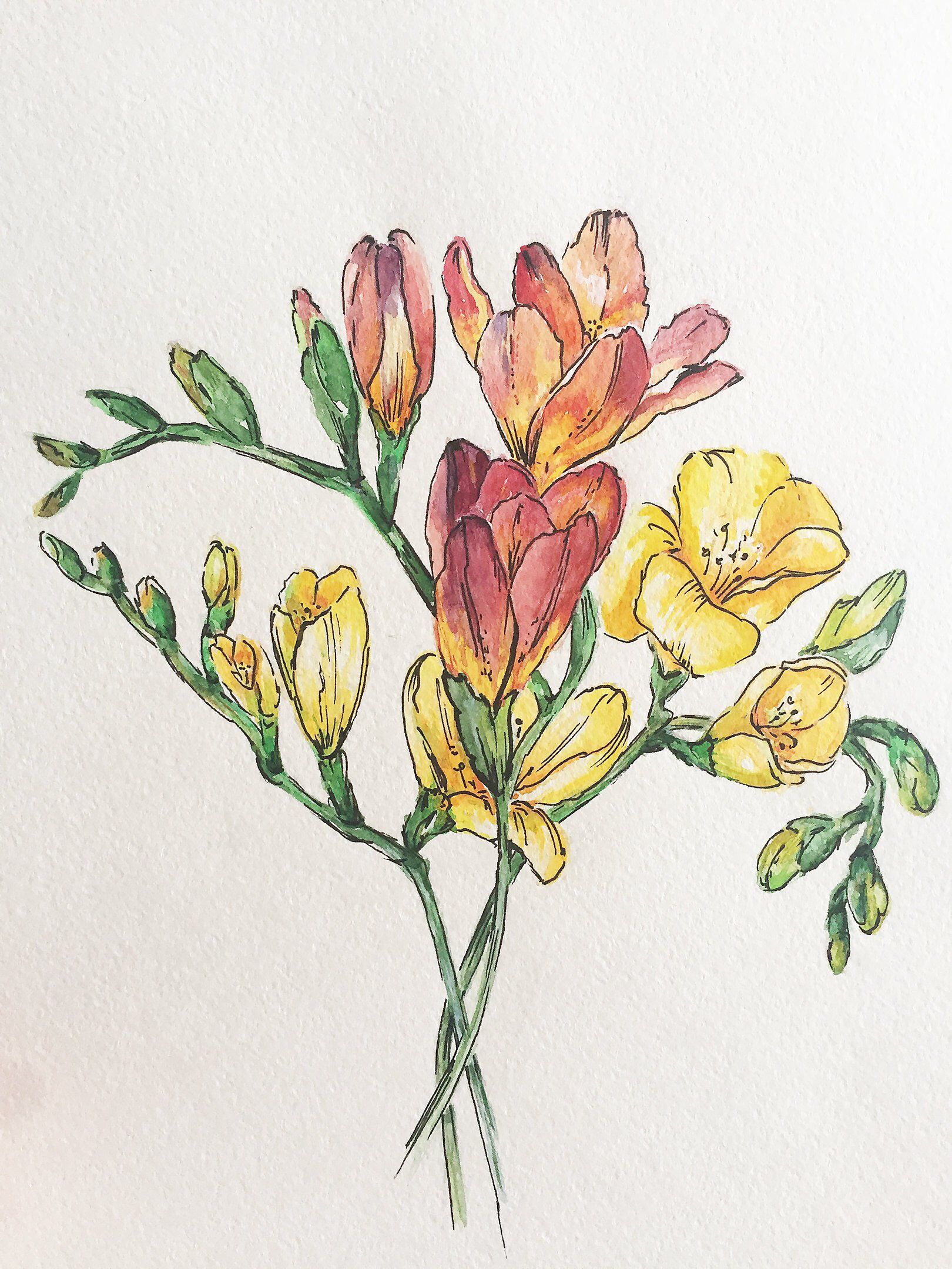 Excited To Share This Item From My Etsy Shop Watercolor Freesia Freesia Art Freesia Flower Watercolor Painting B Botanical Painting Flower Drawing Floral Art