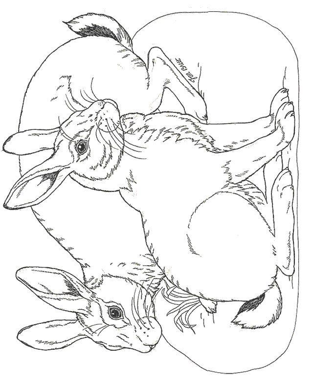 malvorlagen osterhase und ig - zeichnen und färben