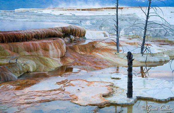 Mammoth Hot Springs-photo by Grant Collier