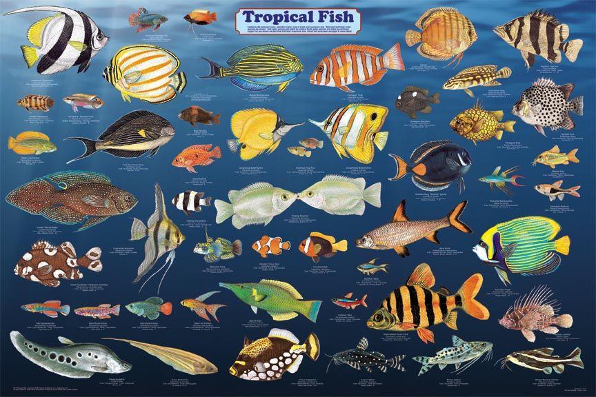 Saltwater Aquarium Fish Identification Aquarium Fish Pinterest