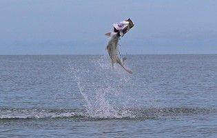Tarpon Islamorada Photo Gallery Saltwater Flies Fly Fishing Saltwater