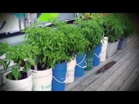 Comment et quand planter du thym, persil, basilic, menthe ...