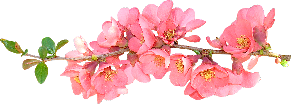 Spring flowers spring flower clip art clipart free
