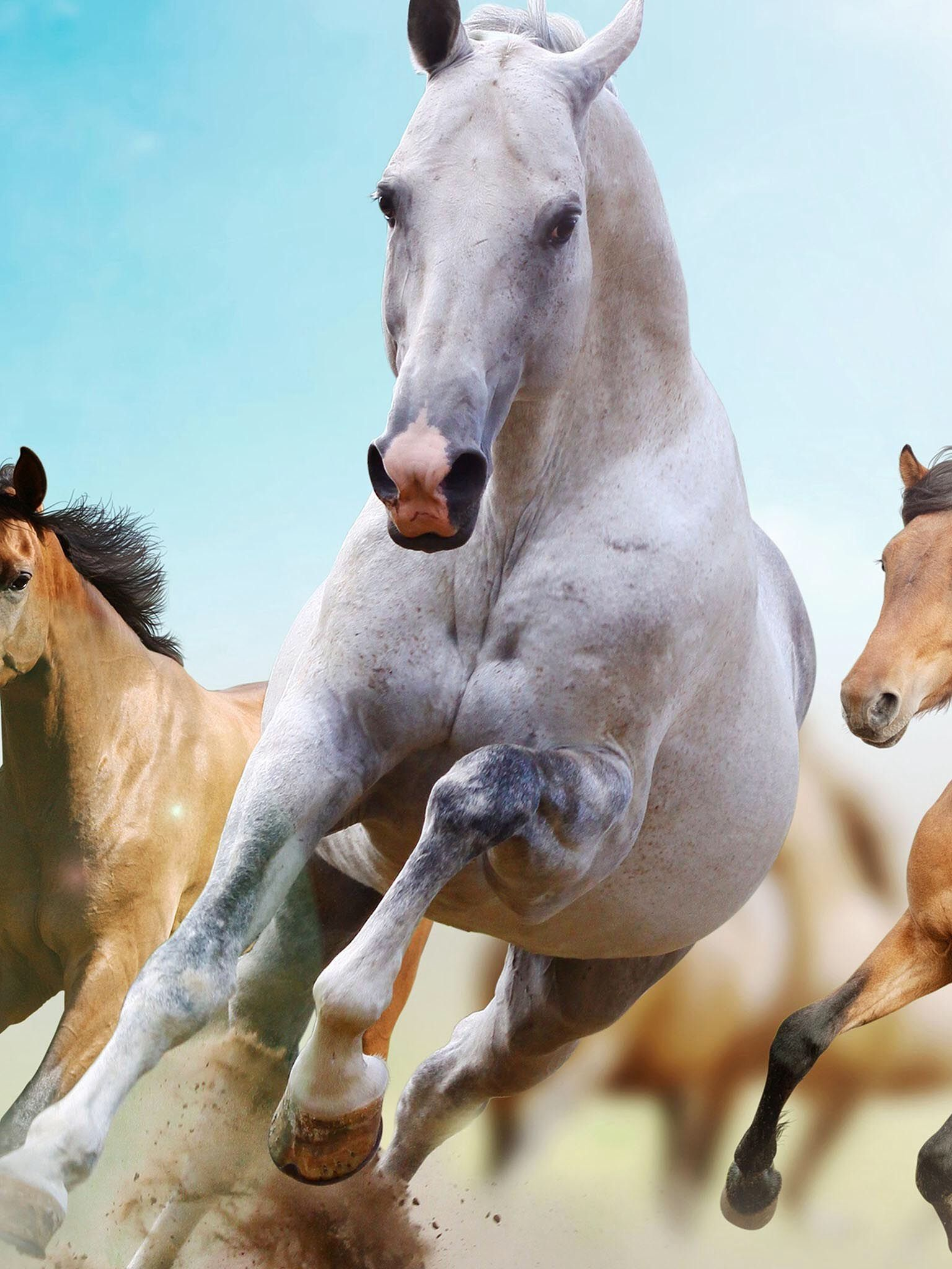 Great Wallpaper Horse Android Phone - 472e2d71baa7b72374ee9ccdc80dff6d  2018_967541.jpg