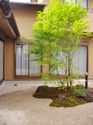イロハモミジ 植木を選ぶ4視点 庭木としておすすめな21種類 千葉県