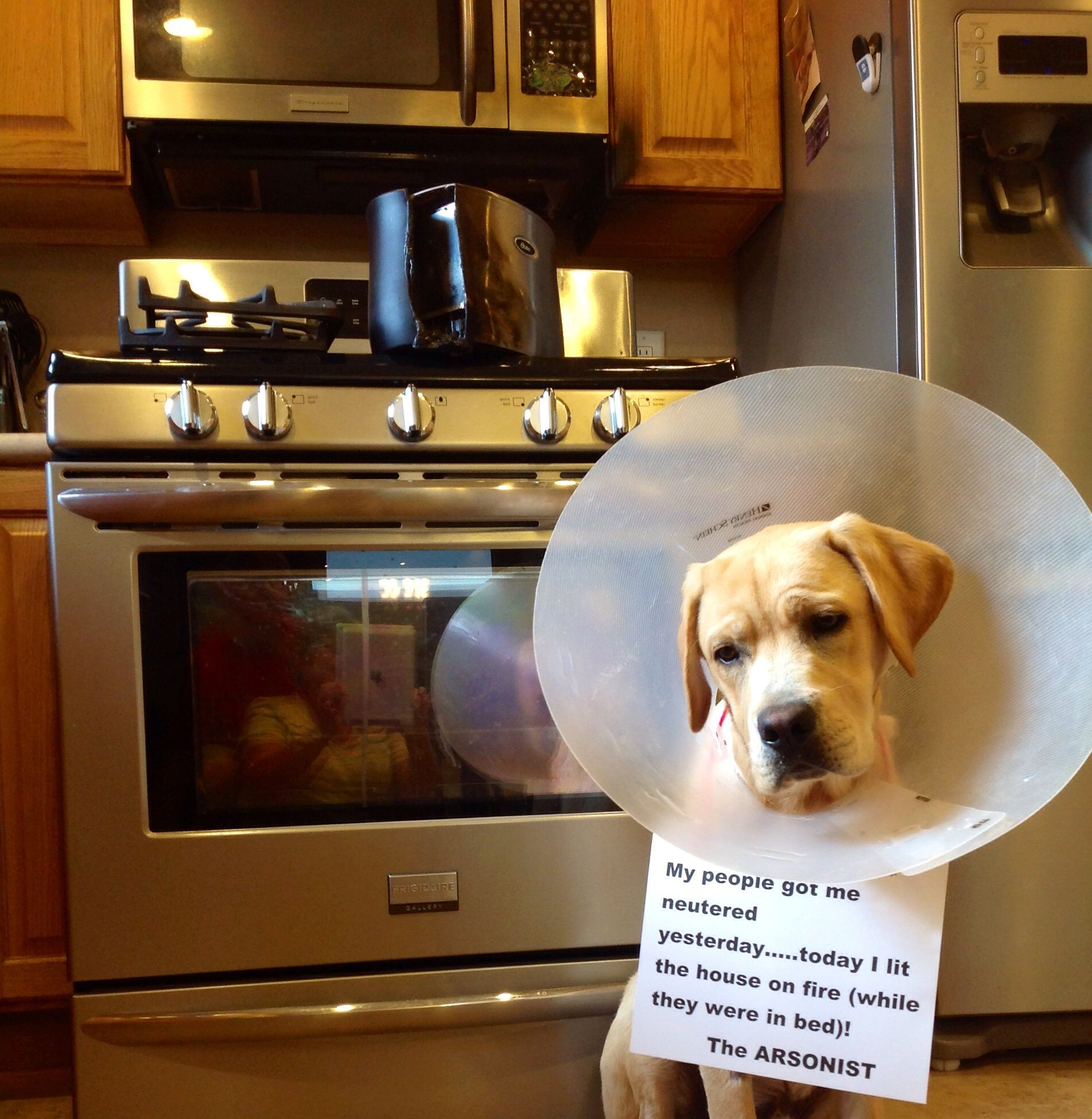 I Paid With My Manhood You Pay With Your Life Dog Shaming