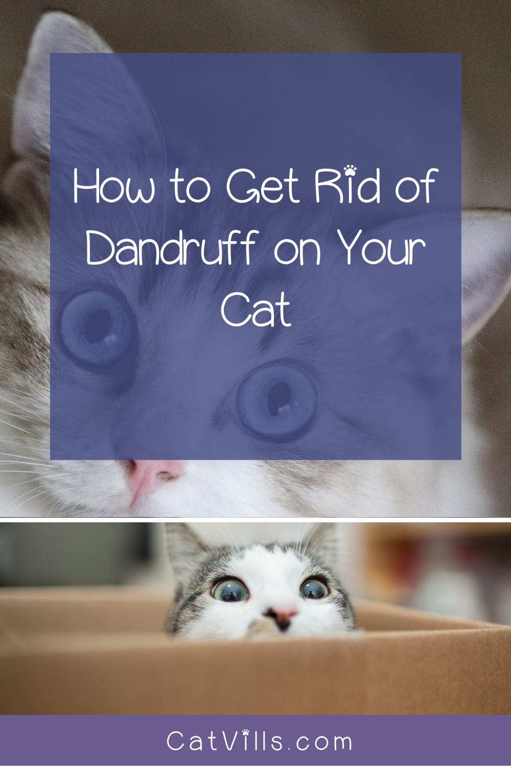 6 Easy Ways To Get Rid Of Dandruff On Your Cat Catvills In 2020 Cats Getting Rid Of Dandruff Cat Care