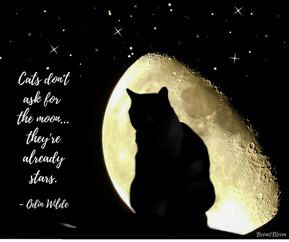 Cool Sayings About Moon: Cats: A Collection Of Quotes