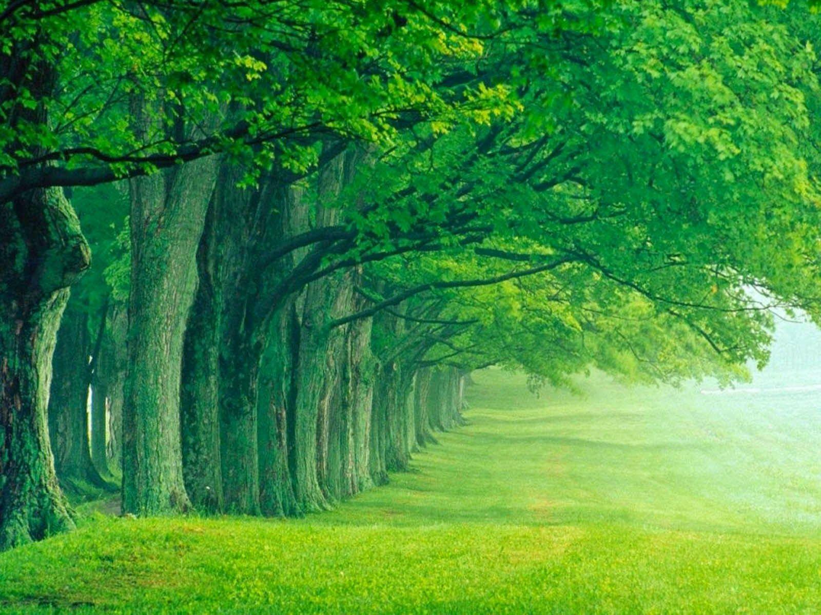 Greenish Nature Beautiful Nature Beautiful Nature Wallpaper Green Nature