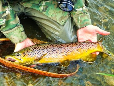 Drew Price Fly Fishing A Young Angler S Luck Fly Fishing Flies Trout Fish Freshwater Fishing