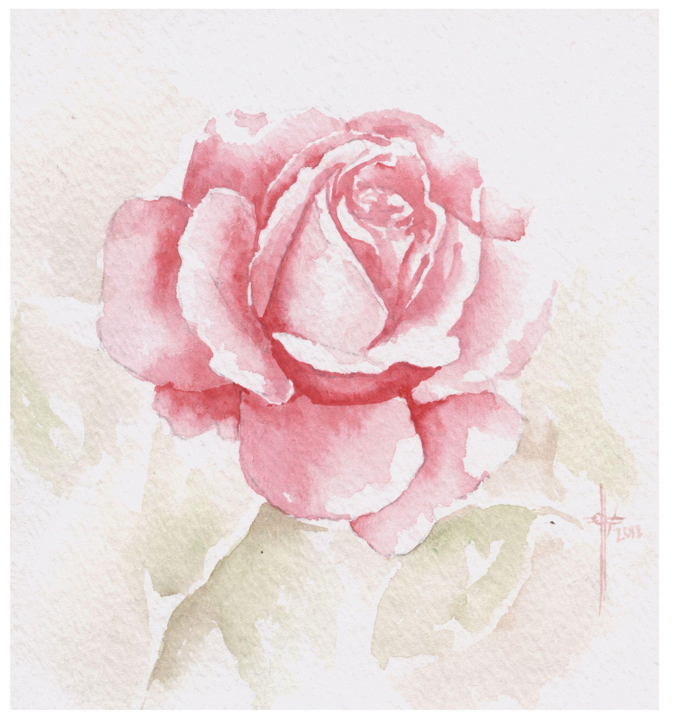 rose.jpg 1.985×2.093 piksel