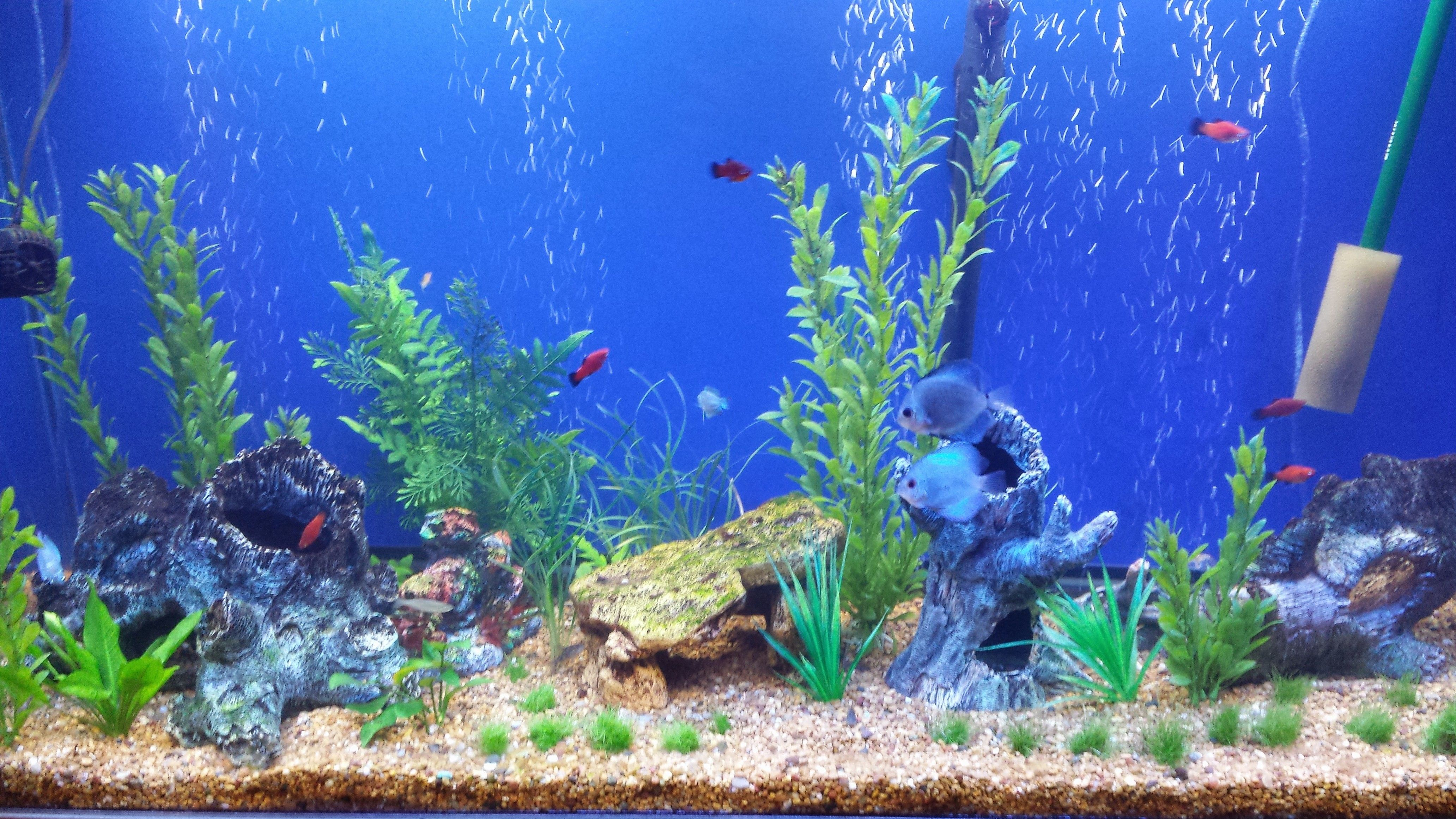 20 Pictures Things To Know About Aquascaping For Beginners Aquarium Backgrounds Aquascape Fish Tank