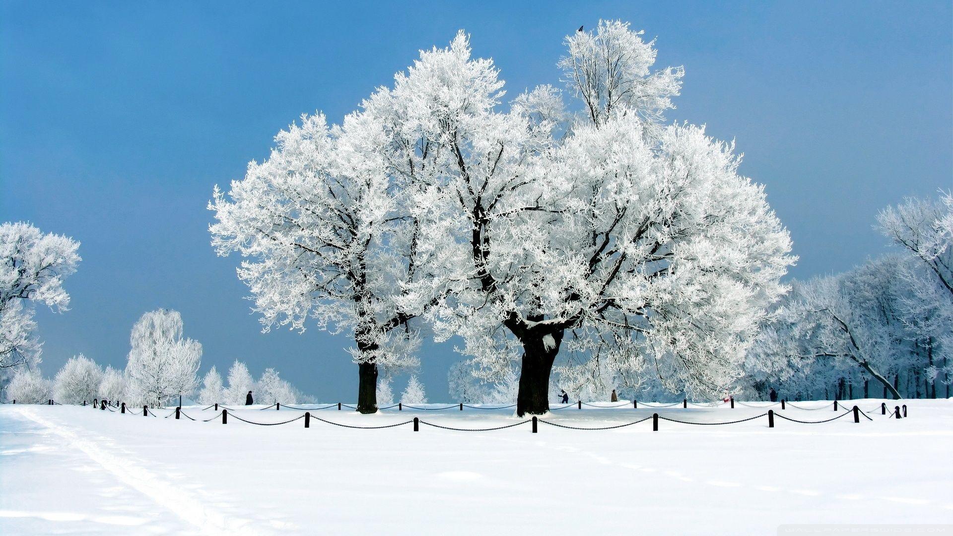 January Winter Desktop Wallpaper Winter landscape
