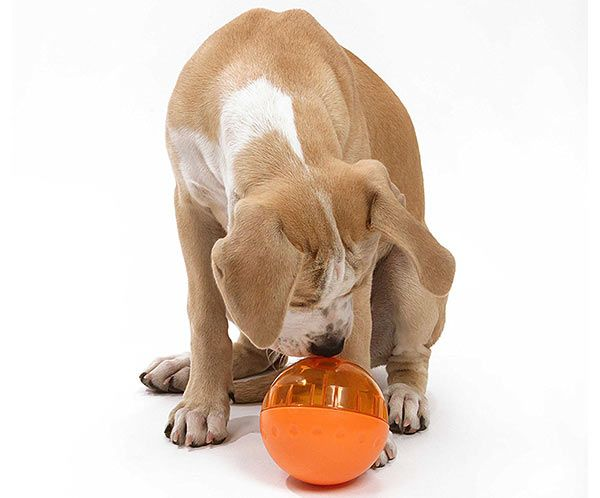 Interactive Dog Toys Best Interactive Dog Toys - Reviews and Tips To Help You Choose