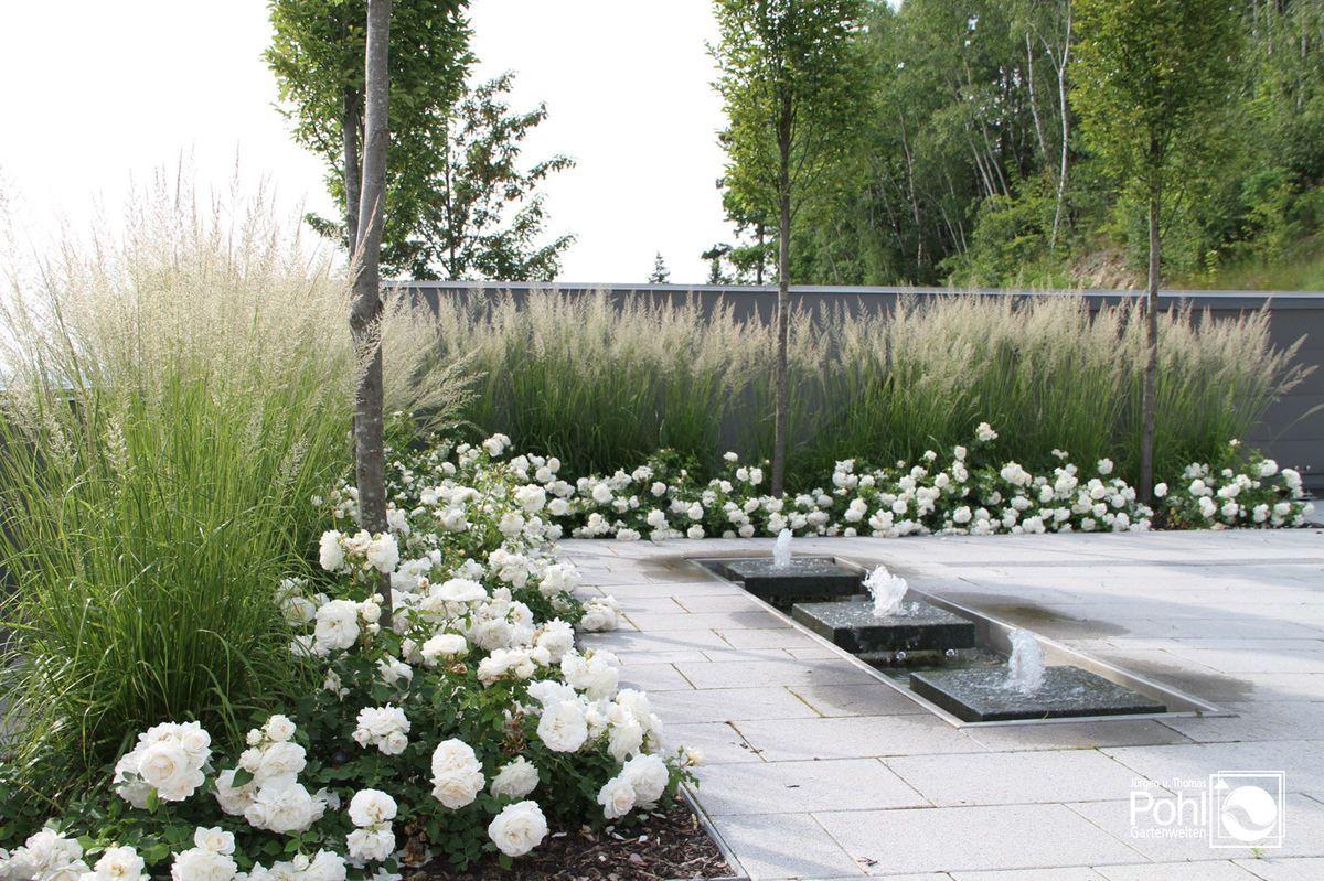 Moderne gärten mein garten garten ideen gräser garten sichtschutz sichtschutz pflanzen blumen garten aspirin google suche