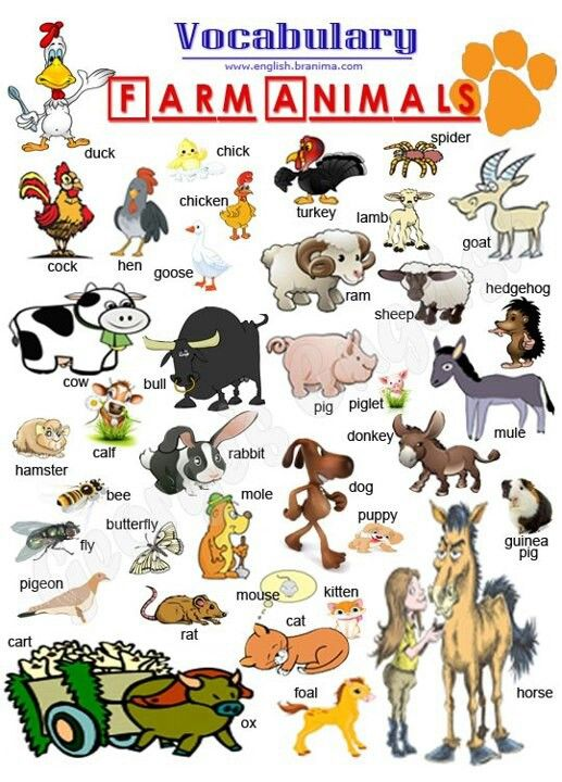 Farm Animals Vocabulario En Ingles Educacion Ingles Clase De Inglés