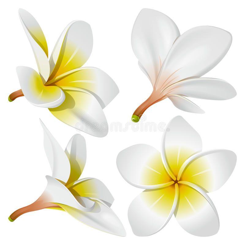Ducky S Designs Flower Stencil Flower Clipart Frangipani Tattoo