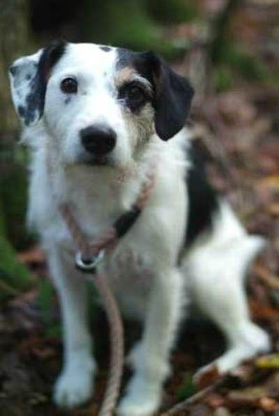 Sykes In Het Bos Hond Jackrussell Hunde Krimi Langeweile
