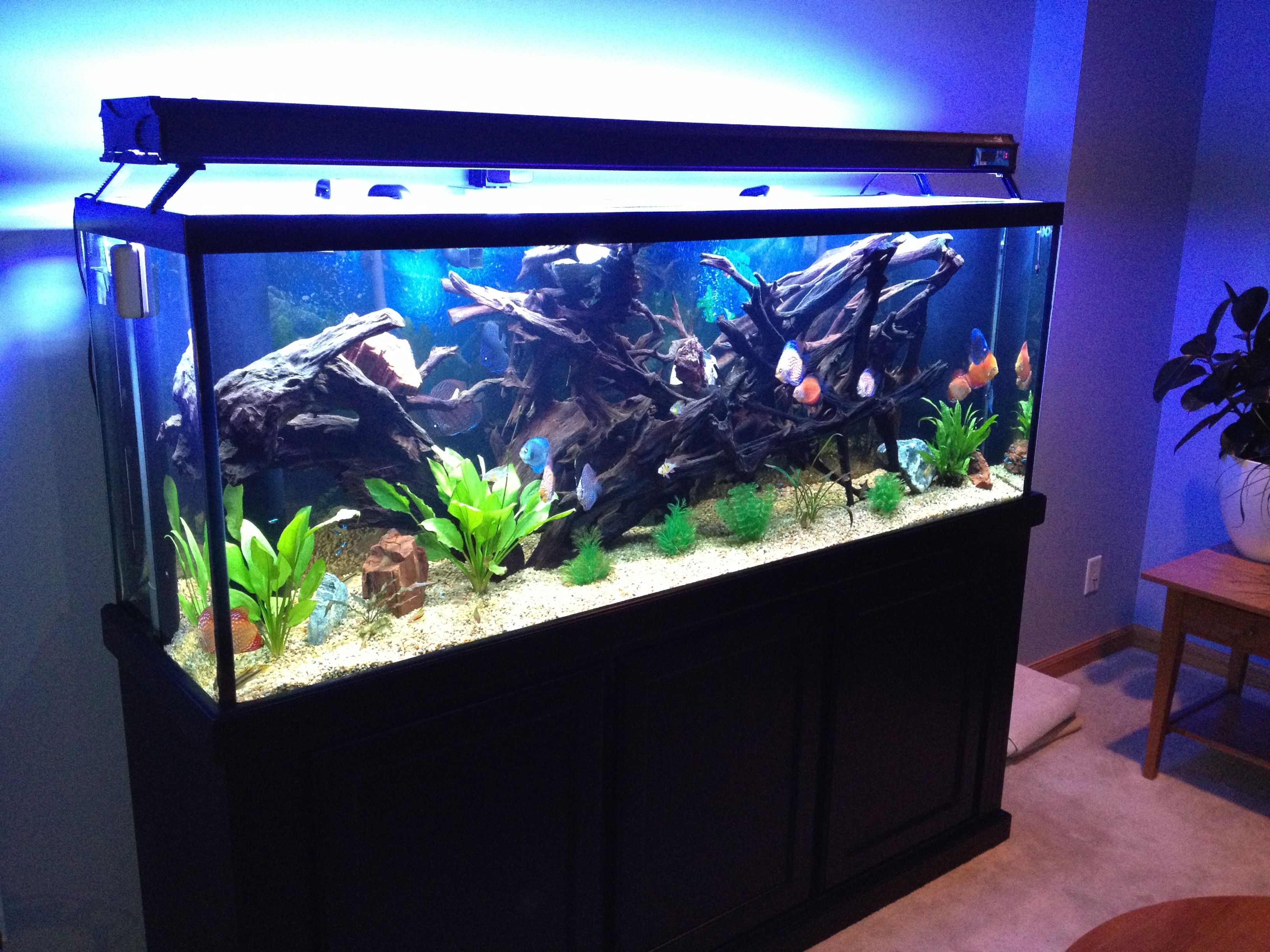 150 gallon discus aquarium Fish Tanks Pinterest