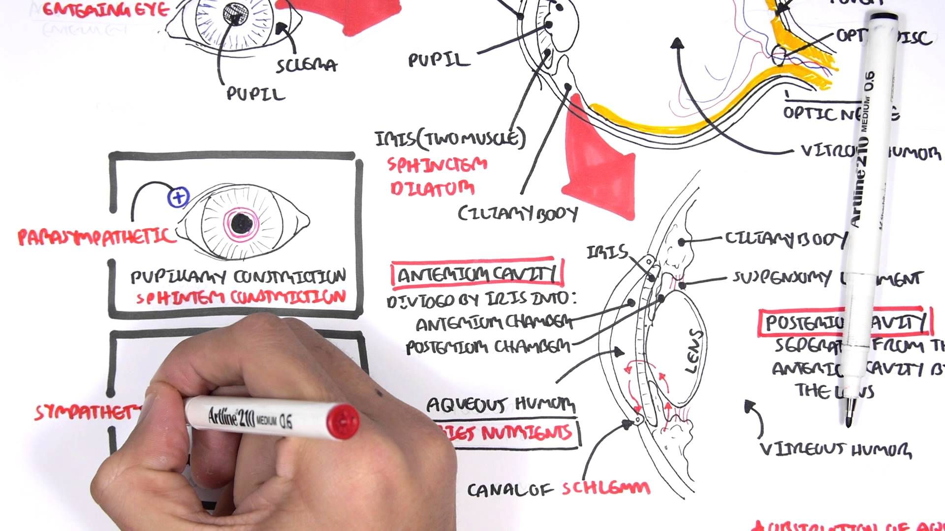 Anatomy - Eye Overview - YouTube | Challenge A research body systems ...